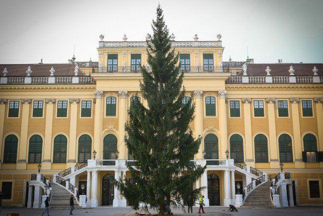 weihnachtsbaum beim weihnachtsmarkt schloss sch nbrunn. Black Bedroom Furniture Sets. Home Design Ideas