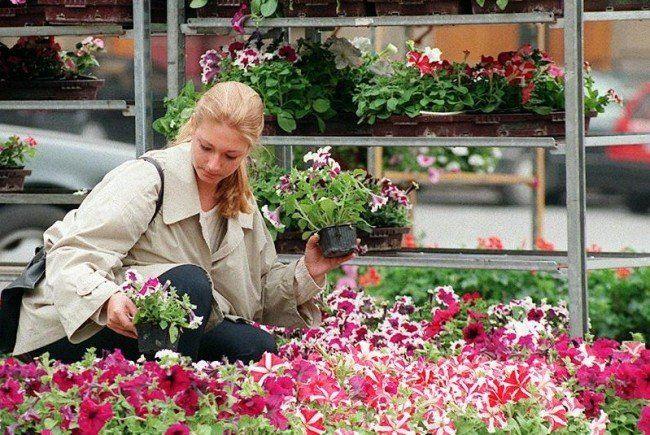 Ab 13. April bieten Gärnter ihre Waren bei den Wiener Blumenmärkten an.