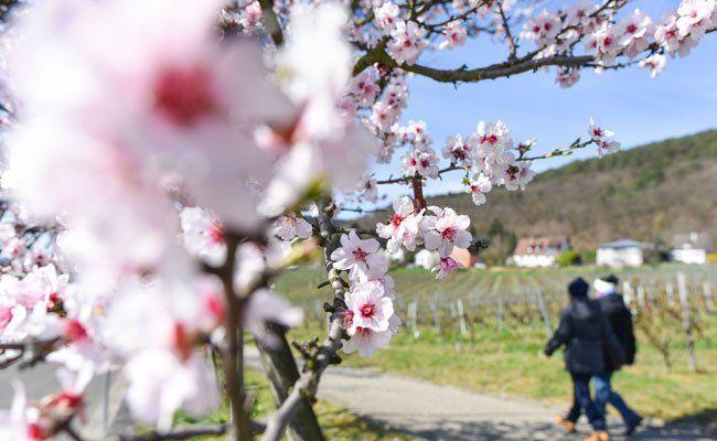 Nach den Frühlingstemperaturen am Wochenende wird es wieder kälter.