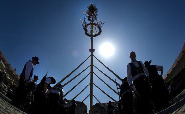 Grinzing bekommt wieder ein Event zur Maibaum-Tradition.