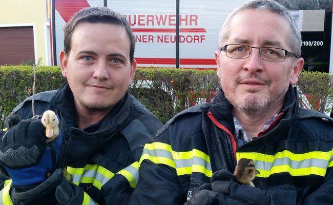 Diese Küken wurden von der Feuerwehr gerettet.