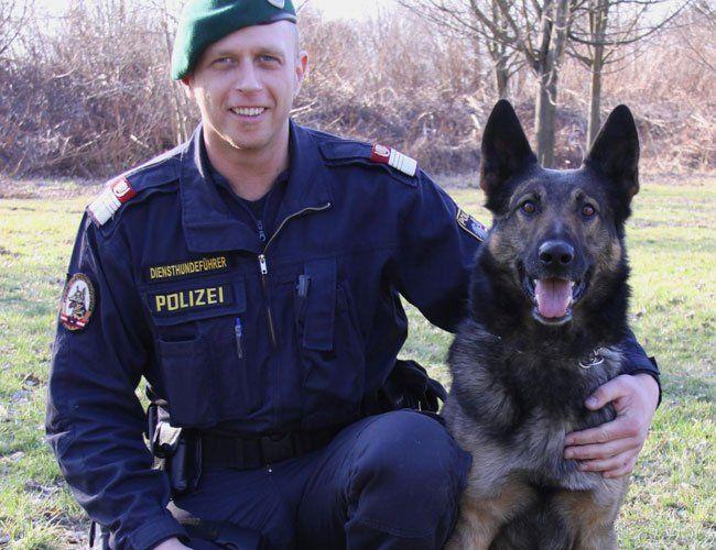 """Polizeihunde fanden Einbrecher. Im Bild: Hund """"Loj"""""""