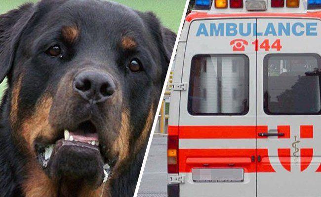 Achtjährige wurde in Wien-Donaustadt von Rottweiler gebissen