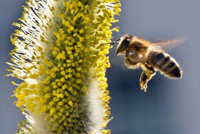 Mit einer Spezialmischung von Blütenpflanzen sind 304 Biodiversitätsflächen auf den Äckern angelegt