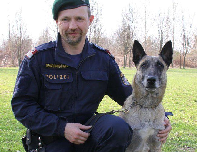 """Spürhund """"Attila vom Heustadlwasser""""."""
