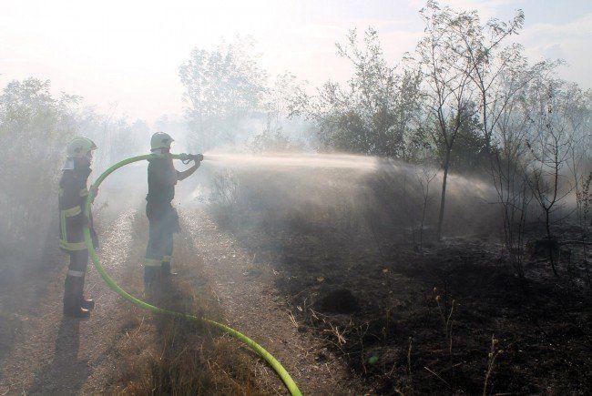 Waldbrand bei Wiener Neustadt