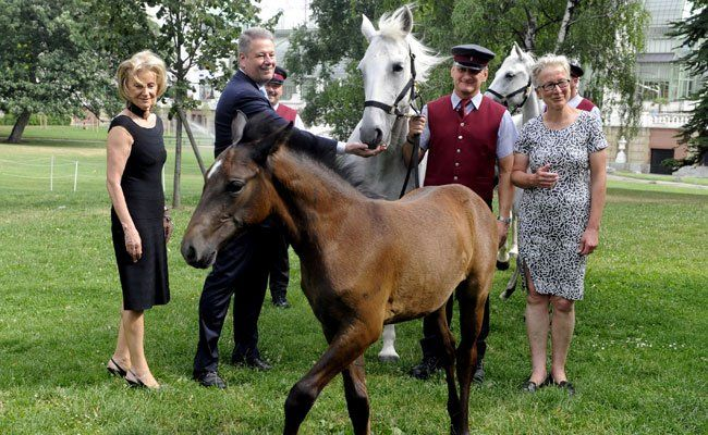 """Auch diesen Sommer gibt es wieder einen """"Pferde-Kindergarten"""" im Wiener Burggarten."""