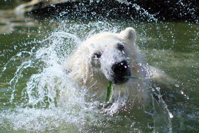 Auch im Tiergarten Schönbrunn wird nach Abkühlung gesucht.