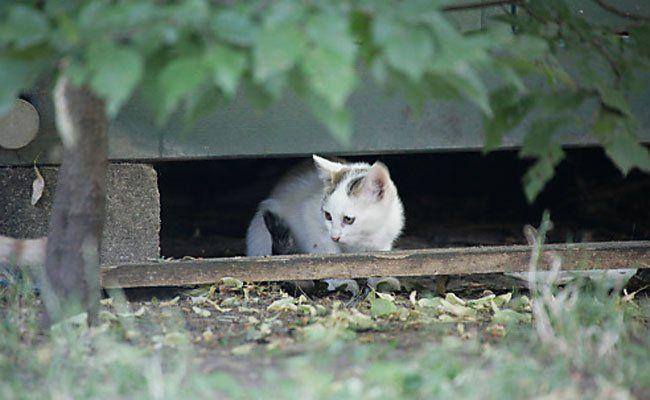 Streunerkatzen sollen von den Straßen geholt werden.