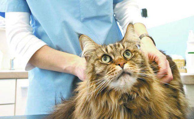 Zahlreiche Katzen wurden von der falschen Tierärztin behandelt.