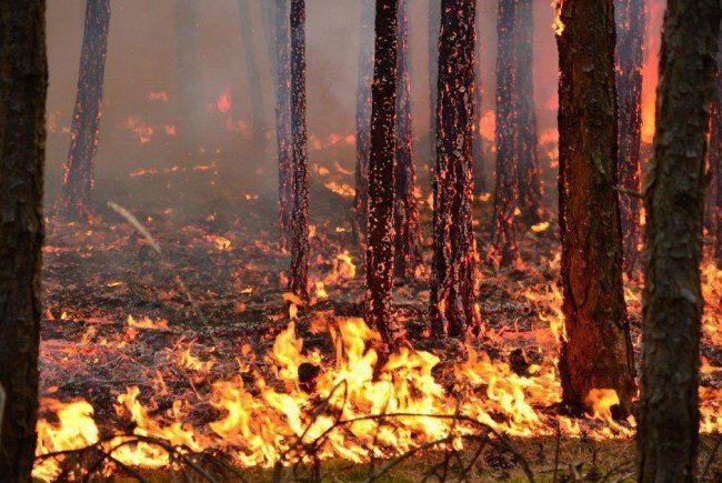 Hohe Waldbrandgefahr gibt es am Wochenende im Osten Österreichs.