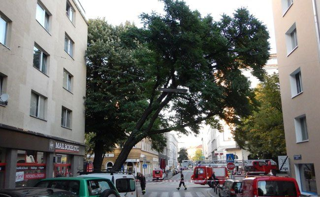 Die Feuerwehr musste den Baum kontrolliert umschneiden.