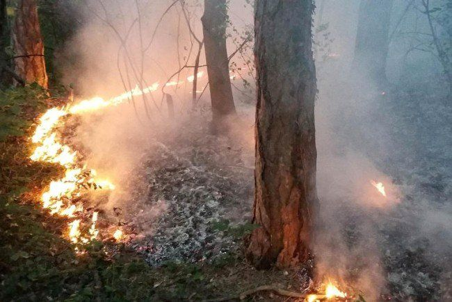 In Ostösterreich kann es in nächster Zeit zu Waldbränden kommen.