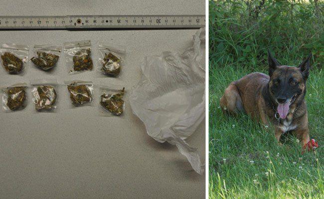 """Diese Drogen stöberte Polizeihund """"Iceman"""" auf"""
