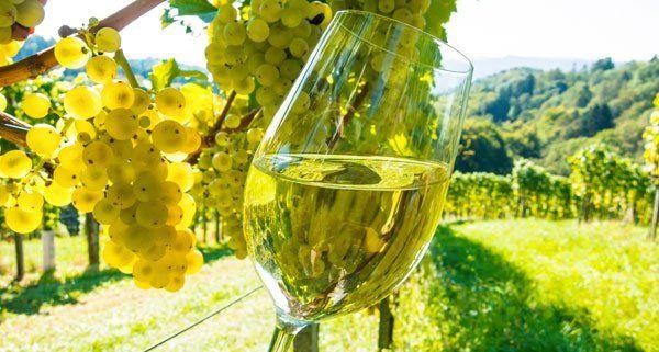 Die besten Weine aus dem Biosphärenpark Wienerwald wurden ausgezeichnet.