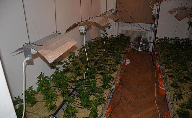 Diese Cannabis-Plantage wurde in Währing entdeckt