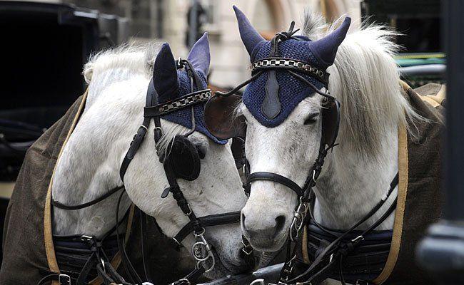 Bei einem schweren Unfall in Meidling wurden Fiaker-Pferde verletzt - eines davon starb