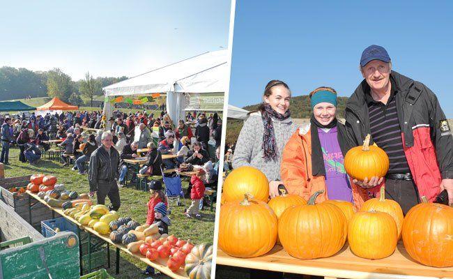 Vom 24. bis 26. Oktober findet wieder das Kürbisfest statt.