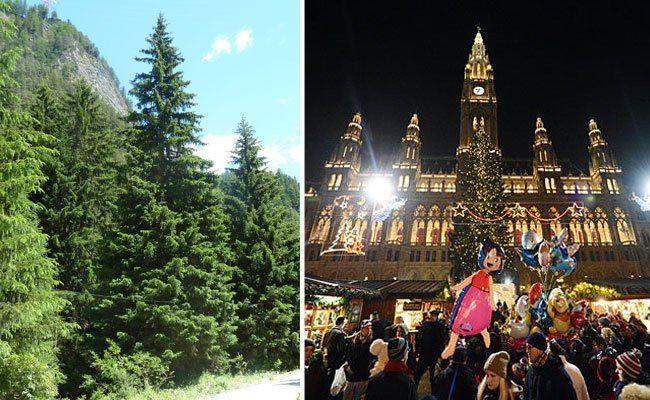 Der Weihnachtbaum 2015 kommt aus Pfunds in Tirol