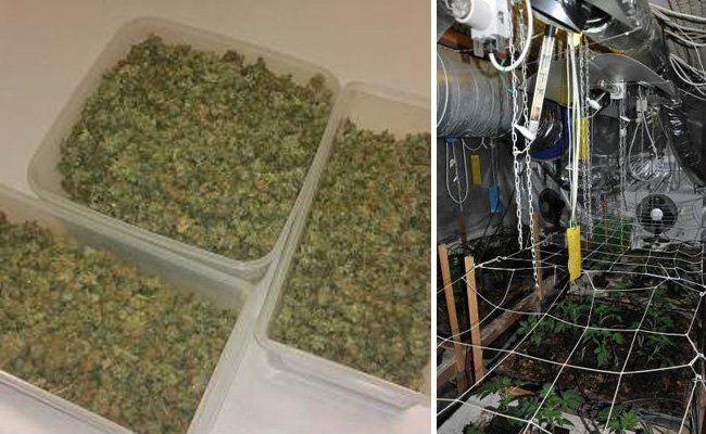 Die sichergestellten Drogen und die Plantage.