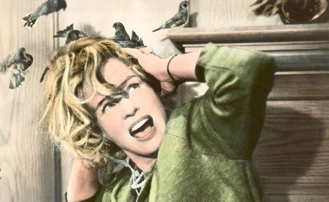 53. Viennale - Von Affe bis Zebra: Animalische Schau im Filmmuseum