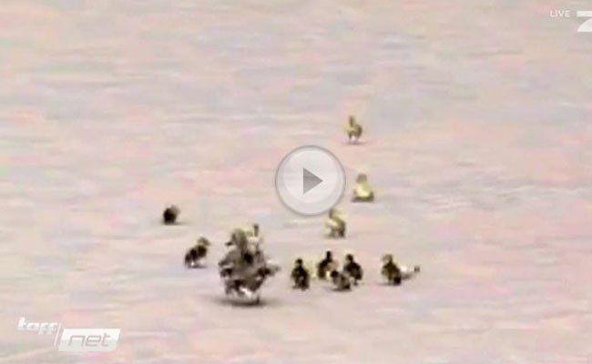 Eine süße Entenfamilie kämpft sich tapfer durch den Herbstwind.