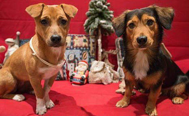Weihnachtsfreuden für Vierbeiner bietet der 1. Hunde-Weihnachtsmarkt Wiens