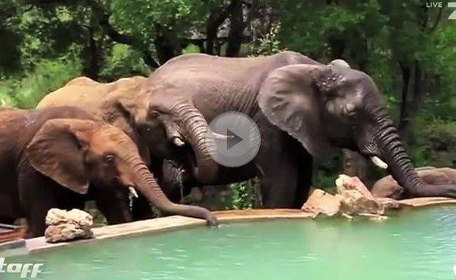 Da hat sich wohl eine Elefanten-Gang etwas verlaufen.