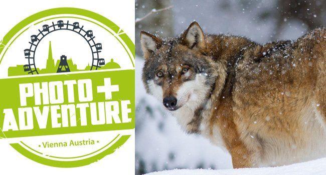 Am 21. und 22. November findet die Photo-Adventure in Wien statt.
