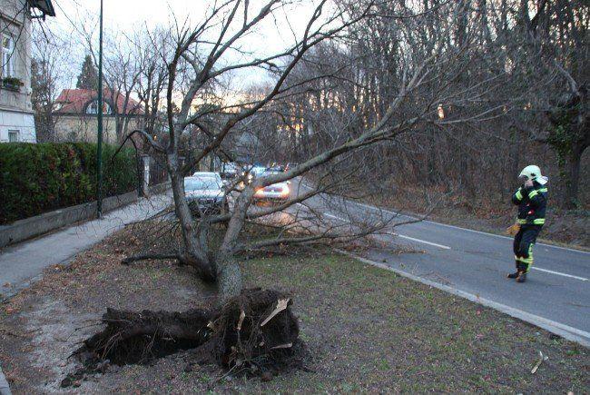 Ein entwurzelter Baum sorgte für einen Einsatz.