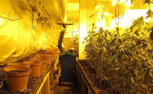 Diese riesige Cannabis-Plantage wurde direkt neben dem Polizei-Areal betrieben