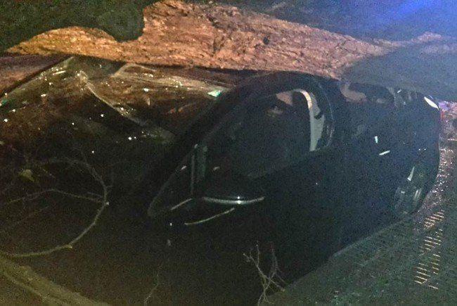 Das Auto wurde vom Baum begraben.