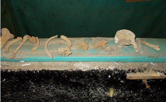Bei Abbrucharbeiten eines Wohnhauses in Wien-Ottakring wurden am 10. November Knochenteile gefunden.