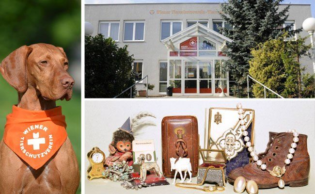 Ein weihnachtlicher Flohmarkt wartet im Wiener Tierschutzverein