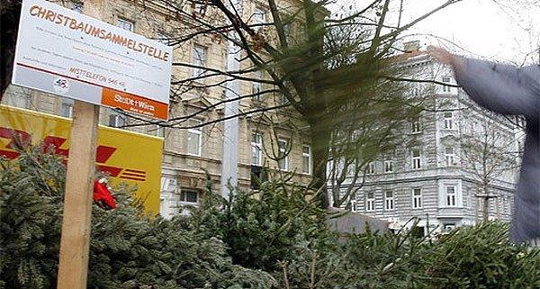 Noch bis 15. Jänner sind die Christbaumsammelstellen in Wien geöffnet.