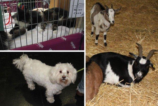 Ob ausgestellte Katzen, mitgebrachte Hunde oder Bauernhoftiere im Heu - die Haustiermesse Wien hat immer einiges zu bieten