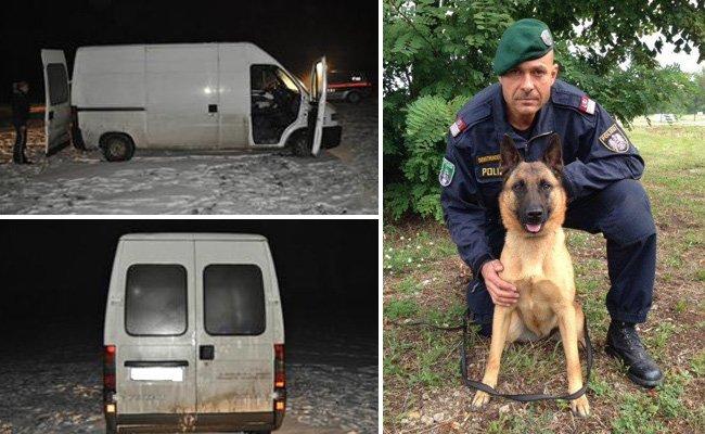 """Polizeihund """"ANUK vom Wolfsgraben"""" spürte den dritten Verdächtigen auf."""
