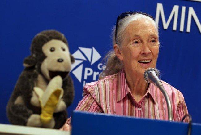 Die Sängerknaben engagieren sich für Jane Goodall.