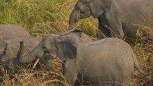 Südsudan: 500 Elefanten in zwei Jahren gewildert