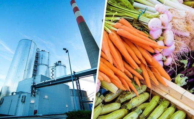 Neue Pilotanlage in Wien: Mit Kraftwerks-CO2 Gemüse düngen