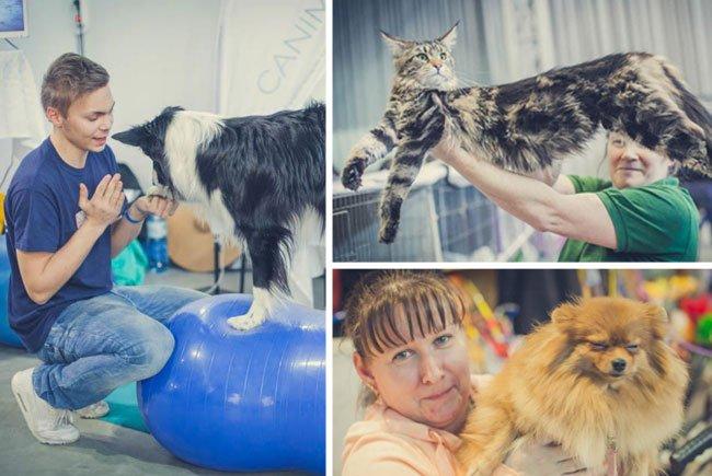Zahlreiche Highlights wurden bei der Haustiermesse 2016 geboten