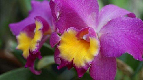 Tropischer Orchideenzauber in den Blumengärten Hirschstetten