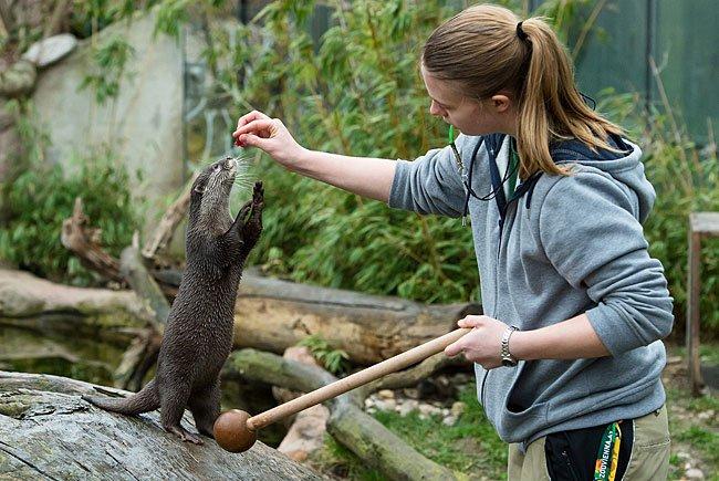Tierpflegerin Melanie Hahn beim Otter-Training