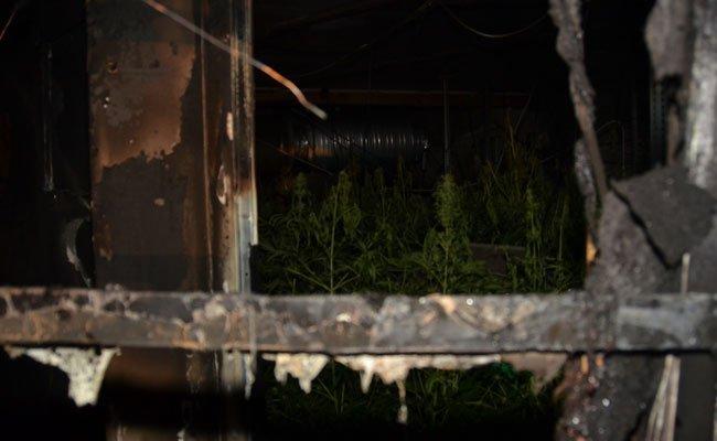 Im März 2015 brannte die Lagerhalle, in der Hanf angepflanzt wurde, komplett aus.