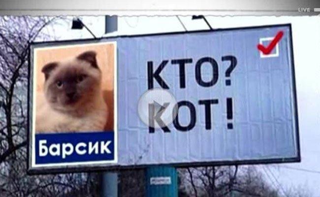 Faltohrkatze Barsik soll die Korruption eindämmen.