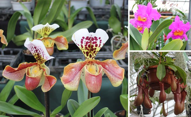 Orchideen sind bekannt für ihre vielfältigen Erscheinungsformen.