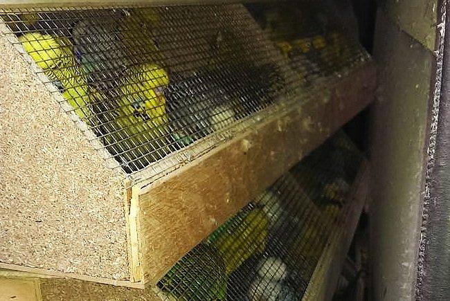 Diese in Kisten und Schachteln verwahrten Hühner, Tauben und Ziervögel wurden in Penzing gefunden