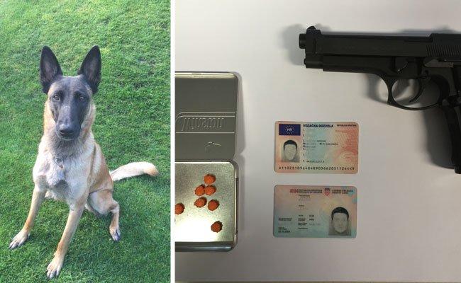 Polizeihunde halfen mit, Drogen und Co. zu finden