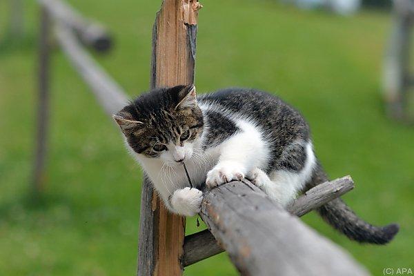 Kein Aprilscherz: Auch Bauernhof-Katzen müssen kastriert werden