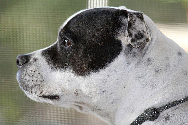 Mit ihrem Hund attackierte eine junge Frau ihre Opfer